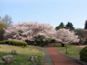 青空に 栄える緑と 桜色