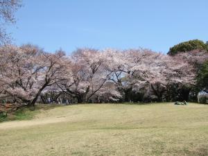 2012年花見_航空公園1