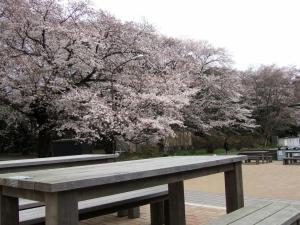 2012年花見_大学2