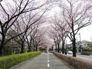 2012年花見_御伊勢塚公園1