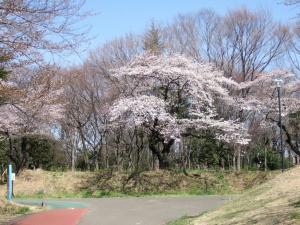 2012年花見_小畔水鳥の郷公園2