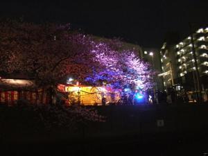 船上設営会_第2回夜桜
