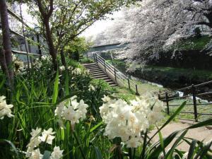 春は色々な花が咲きまする